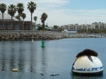 Redondo beach, King Harbor, sea lion, Jim Caldwell