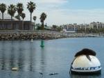 Redondo beach, King Harbor, sea lion, Jim Caldwell