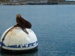 Redondo Beach, King Harbor, sea lions, Jim Caldwell