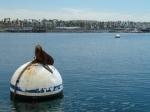 Redondo Beach, King Harbor, Jim Caldwell, Old Tony's, sea lion