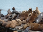 Redondo Beach, Sea Lions, King Harbor, Jim Caldwell