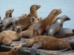 Redondo Beach, Sea Lions, Jim Caldwell